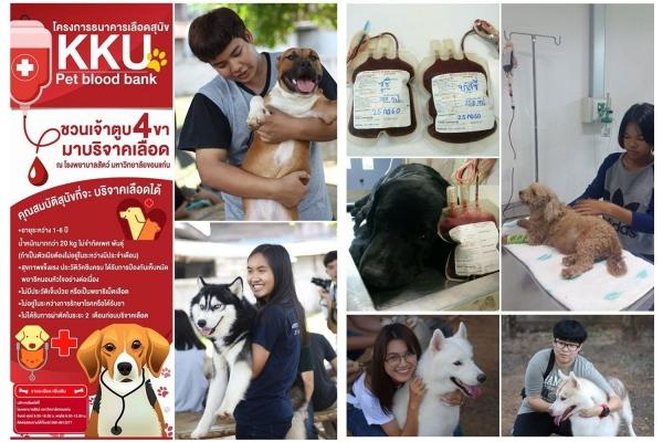 คณะสัตวแพทยศาสตร์ มข.ขอเชิญเจ้าของสุนัขและแมวร่วมบริจาคเลือดเพื่อช่วยเหลือสัตว์ป่วย